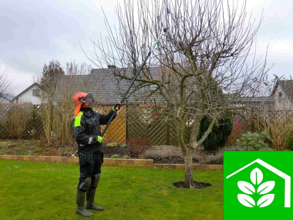 Magnus Fastighetsservice utför trädgårdsarbete här beskärning och klippning av äppelträd fruktträd i glumslöv